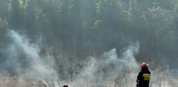 Wielki pożar lasu pod Legionowem