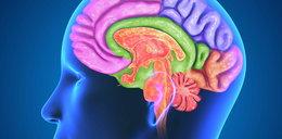 7 rzeczy, których nie wiesz o mózgu