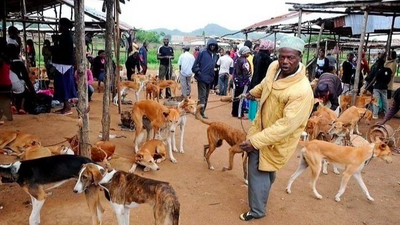 Ban consumption of dog and cat meat - Animal Rights Activist petitions government