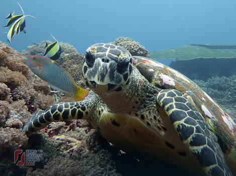 Čudesni svet pod vodom