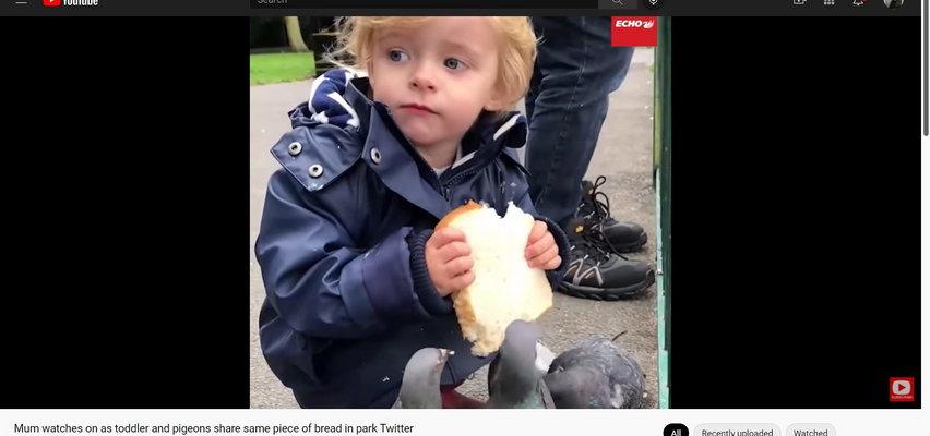 Chłopiec pozwolił skubać gołębiom kromkę, którą trzymał przy ustach. Piękne, ale czy bezpieczne?