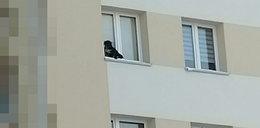 Co za potwór! Wystawił psa na parapet na 9. piętrze