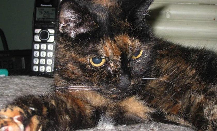 Umarła najstarsza kotka świata