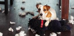 DNA naszego psa na półce? To możliwe!