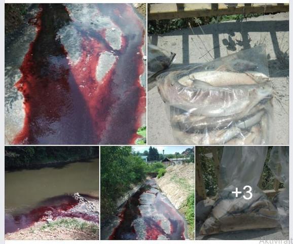 Slike krvavo crvene vode i mrtve ribe u Južnoj Moravi, koje kruže društvenim mrežama