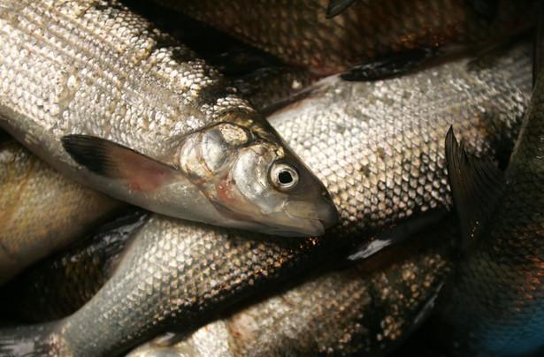 Unia przeznacza na wsparcie rybołówstwa 6,5 euro