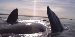 Niesamowite! Wieloryb wziął kajakarzy na barana
