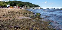 Sanepid alarmuje. Kolejne nadmorskie kąpieliska zamknięte z powodu sinic