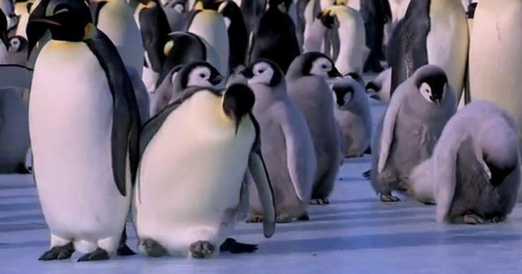 322279_pingvini2youtube