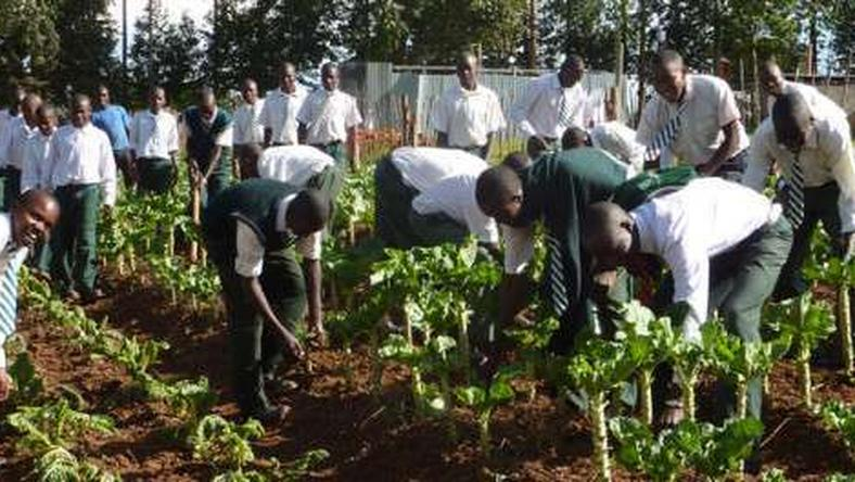 Youth in Agric