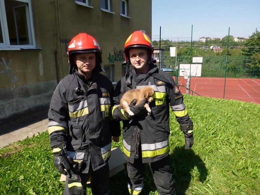 Strażacy z JRG w Bielsku-Białej uratowali szczeniaczka