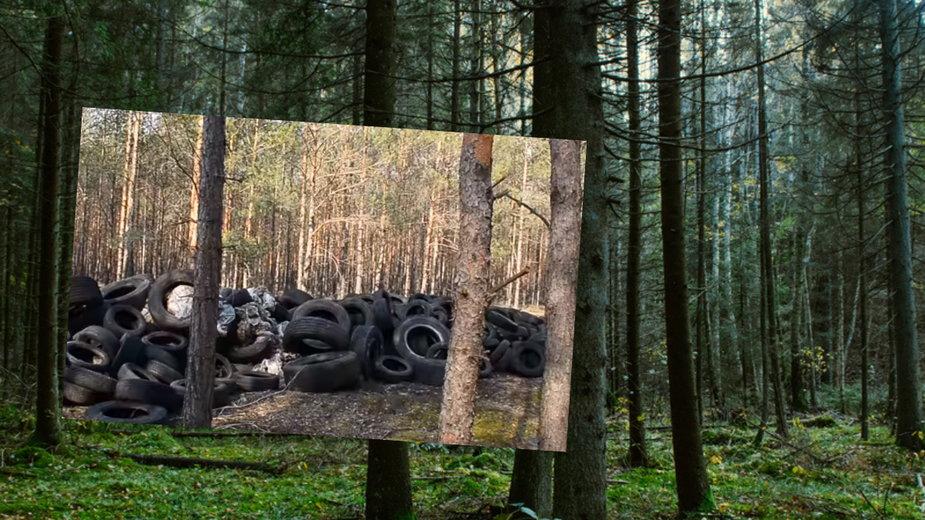 Sterta opon w lubuskim lesie