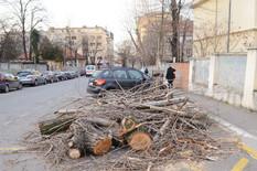 Vojvode Supljikca, palo drvo na kola_170216_RAS foto Ana Paunkovic002