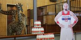 Gortat został chrzestnym słynnej żyrafy!