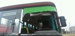 Kaczka raniła dziecko i kierowcę w Rudnie. Szukają właściciela ptaka