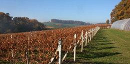 Małopolska stolicją winiarstwa