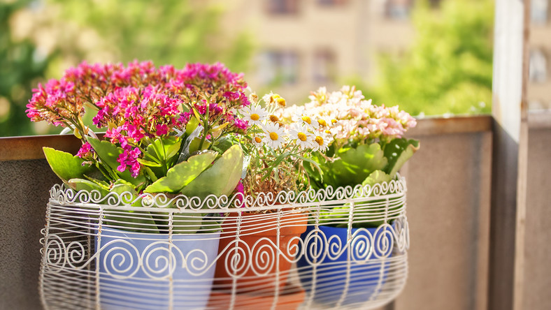 kwiaty, doniczka, balkon