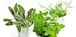 Leki z domowego ogródka