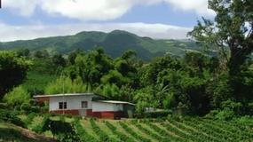 Turystyczna Jazda - Jak się uprawia kawę w Kostaryce