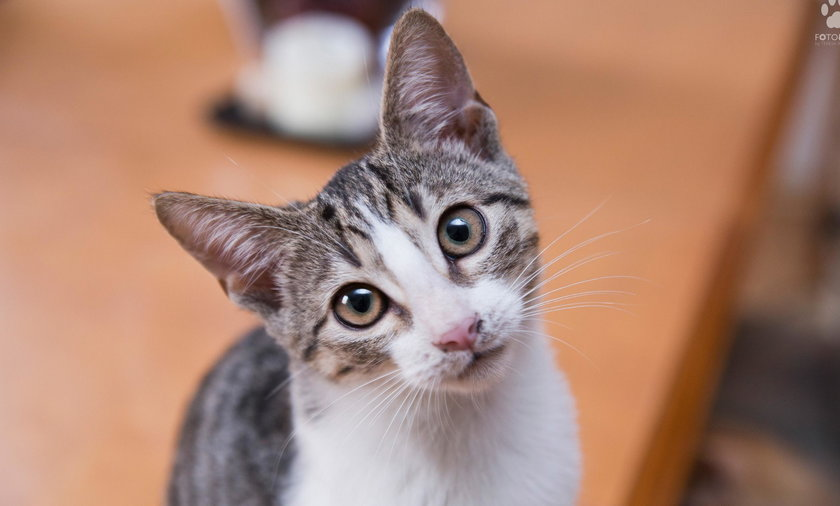 Kociaki polecają się do adopcji