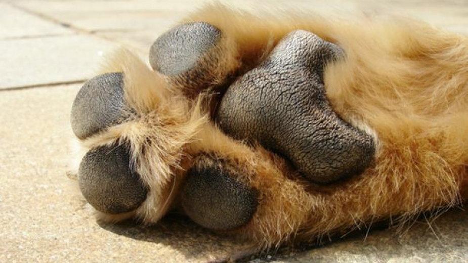 Jak dbać o poduszki palcowe psów i kotów