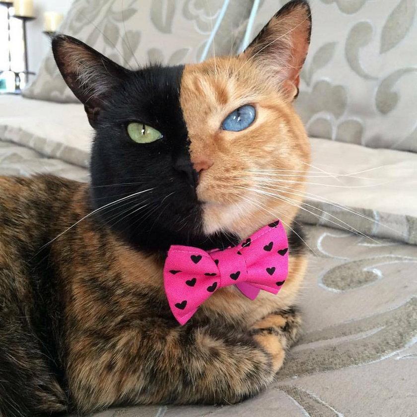 Kotka o dwóch twarzach