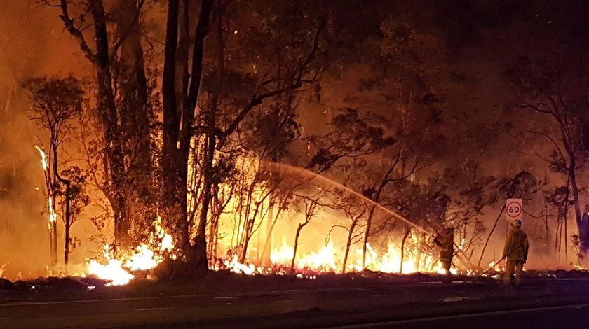 Pożar spustoszył ponad 2500 hektarów australijskiego buszu