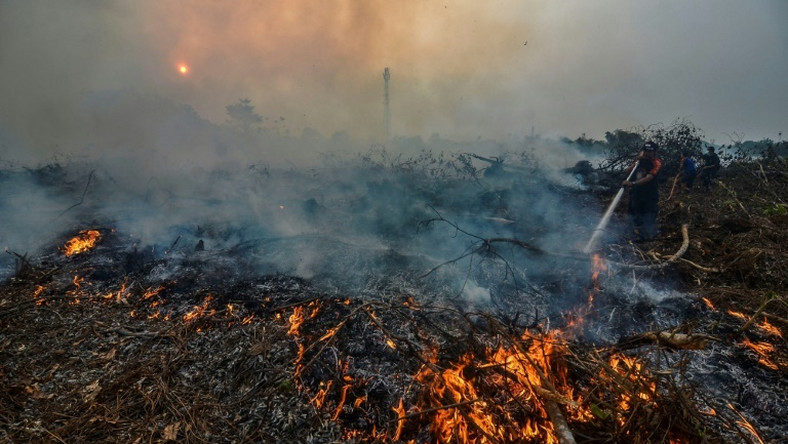 Indonesian forest fires are an annual problem during the dry season but this year's are the worst since 2015, when the region was choked by toxic smoke for weeks
