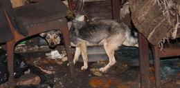 W takich warunkach żyły psy i ich właścicielka