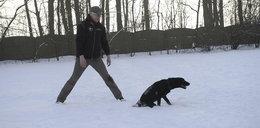 Sparaliżowany pies ma ogromną wolę życia