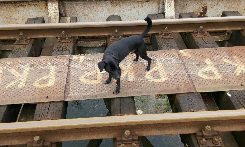 Pies porzucony na torach