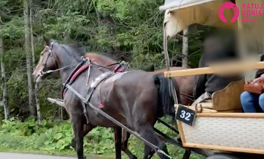 Kulejący koń na trasie do Morskiego Oka.