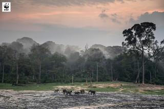 Tak wymiera Ziemia. Raport WWF pokazuje katastrofalne skutki destrukcji środowiska przez człowieka