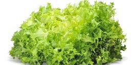 Endywia: tego warzywa nie znałeś!