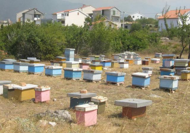 Najlošija godina za pčelare