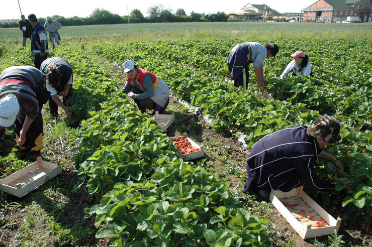 bijeljina poljoprivredna proizvodnja