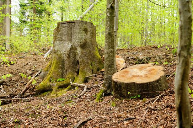Sprawą kluczową powinno być zróżnicowanie gospodarki leśnej