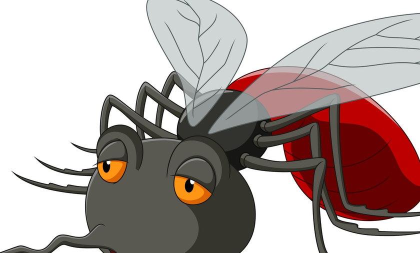Jak walczyć z owadami