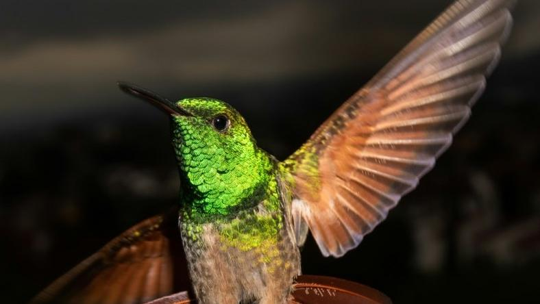 Mexico City has 17 of the world's 330 hummingbird species