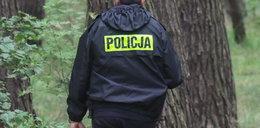 Tragedia w lesie pod Lublinem. Nie żyje mężczyzna wycinający drzewo