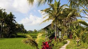 Blondynka na Bali - wigilia o zapachu duriana