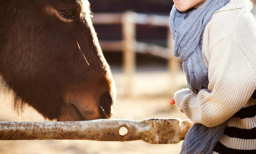 Dziecko głaskało zwierzęta w mini zoo