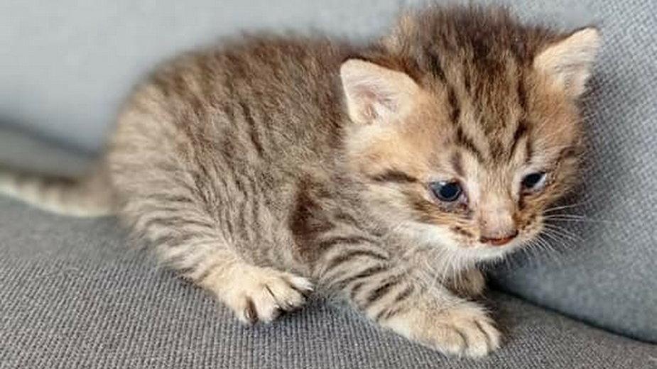 Uratowany kotek na wysypisku śmieci fot. Inneko Gorzów