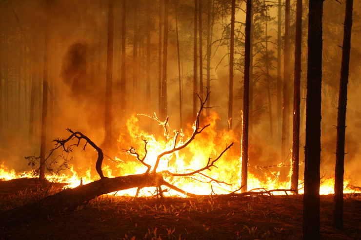 rusija požari