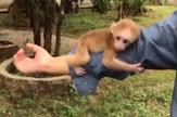 YT_cudni_majmun_kina_vesti_blic_safe