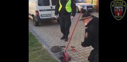 Tak strażnicy miejscy z Kalisza ratowali szpaki. Pomógł im mop
