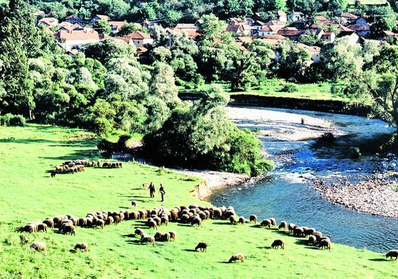 Ovčari na Staroj planini