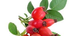 To prawdziwy zastrzyk witamin! Dzika róża chroni przed infekcjami. Jak ją stosować?