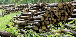 Kup drewno od leśników