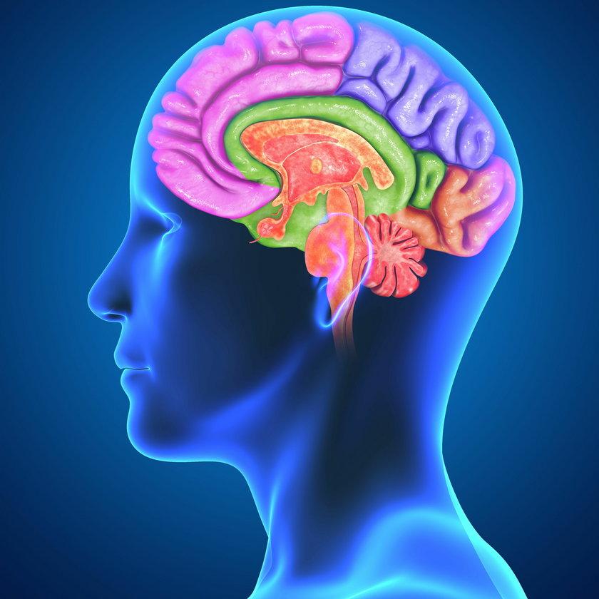 Za co odpowiada lewa i prawa półkula mózgu?